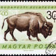 "HUNGARY - CIRCA 1961: A stamp printed in Hungary from the ""Budapest Zoo Animals"" issue shows an American bison (Bison bison), circa 1961. — Stock Photo"