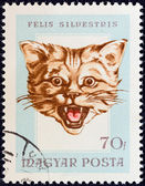 "HUNGARY - CIRCA 1966: A stamp printed in Hungary from the ""Hunting Trophies"" issue shows a wildcat (Felis silvestris), circa 1966. — Stock Photo"