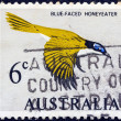 AUSTRALIA - CIRCA 1966: A stamp printed in Australia shows a Blue-faced Honeyeater bird (Entomyzon cyanotis), circa 1966. — Stock Photo