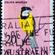 AUSTRALIA - CIRCA 1966: A stamp printed in Australia shows a Golden Whistler bird (Pachycephala pectoralis), circa 1966. — Stock Photo