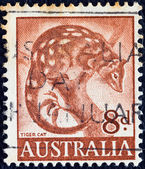 AUSTRALIA - CIRCA 1959: A stamp printed in Australia shows a Tiger Cat (Dasyurus maculatus), circa 1959. — Stockfoto