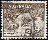AUSTRALIA - CIRCA 1937: A stamp printed in Australia shows a Platypus (Ornithorhynchus anatinus), circa 1937. — Foto Stock