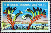 AUSTRALIA - CIRCA 1962: A stamp printed in Australia issued for the British Empire and Commonwealth Games, Perth shows Perth and Kangaroo Paw plant, circa 1962. — Stock Photo