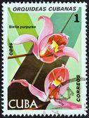 """Kuba - cca 1980: známka vytištěna na kubě od """"orchideje"""" emise ukazuje bletia purpurea, cca 1980. — Stock fotografie"""