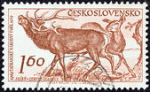 "CZECHOSLOVAKIA - CIRCA 1959: A stamp printed in Czechoslovakia from the ""10th anniversary of Tatra National Park"" issue shows Red deers (Cervus elaphus), circa 1959. — Stock Photo"