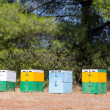 Stock Photo: Beehives in forest
