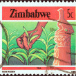 "ZIMBABWE - CIRC1985: stamp printed in Zimbabwe from ""National Infrastructure"" issue shows Tea, circ1985. — Stock Photo #31273385"
