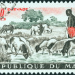 Stock Photo: MALI - CIRC1961: stamp printed in Mali shows sheep at pool, circ1961.