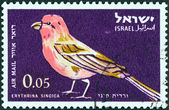 "ISRAEL - CIRCA 1963: A stamp printed in Israel from the "" Birds"" issue shows Sinai rosefinch (Carpodacus synoicus), circa 1963. — Stock Photo"