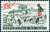 MALI - CIRCA 1961: A stamp printed in Mali shows sheep at pool, circa 1961. — Stock Photo