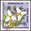 "MONGOLIA - CIRCA 1979: A stamp printed in Mongolia from the ""Flowers"" issue shows Potaninia mongolica, circa 1979. — Stock Photo"
