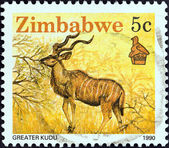 "ZIMBABWE - CIRCA 1990: A stamp printed in Zimbabwe from the ""Wildlife"" issue shows Greater kudu, circa 1990. — Stock Photo"