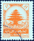 LEBANON - CIRCA 1948: A stamp printed in Lebanon shows Cedar of Lebanon, circa 1948. — 图库照片
