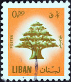 LEBANON - CIRCA 1974: A stamp printed in Lebanon shows Cedar of Lebanon, circa 1974. — Stock Photo