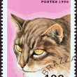 "CONGO REPUBLIC - CIRCA 1996: A stamp printed in Congo from the ""Domestic Cats"" issue shows a Maine Coon, circa 1996. — Stock Photo"