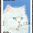 "Stock Photo: CONGO REPUBLIC - CIRC1996: stamp printed in Congo from ""Domestic Cats"" issue shows Persian, circ1996."