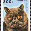 "Stock Photo: CONGO REPUBLIC - CIRC1996: stamp printed in Congo from ""Domestic Cats"" issue shows Exotic Shorthair, circ1996."
