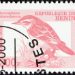 Постер, плакат: BENIN CIRCA 2000: A stamp printed in Benin shows a Sedge Warbler Acrocephalus shoenobeanus bird circa 2000