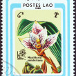 "LAOS - CIRCA 1985: A stamp printed in Laos from the ""Argentina '85 International Stamp Exhibition, Buenos Aires. Orchids"" issue shows Maxillaria sanderiana, circa 1985. — Stock Photo"