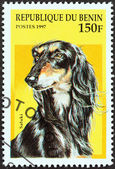 "BENIN - CIRCA 1997: A stamp printed in Benin from the ""Dogs"" issue shows a Saluki, circa 1997. — Photo"