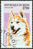 "BENIN - CIRCA 1997: A stamp printed in Benin from the ""Dogs"" issue shows a Siberian Husky, circa 1997. — Stok fotoğraf"