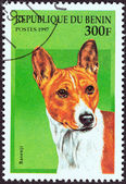 """BENIN - CIRCA 1997: A stamp printed in Benin from the """"Dogs"""" issue shows a Basenji, circa 1997. — Stock Photo"""