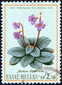 "GREECE - CIRCA 1970: A stamp printed in Greece from the ""Nature Conservation Year"" issue shows a Jankaea heldreichii plant, circa 1970. — Stock Photo"