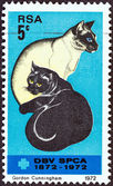 SOUTH AFRICA - CIRCA 1972: A stamp printed in South Africa issued for the Centenary of Societies for the Prevention of Cruelty to Animals shows Black and Siamese Cats, circa 1972. — Stock Photo