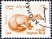 """AFGHANISTAN - CIRCA 1998: A stamp printed in Afghanistan from the """"Wildlife"""" issue shows a Beech marten (Martes foina), circa 1998. — Stock Photo"""