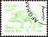 "AFGHANISTAN - CIRCA 1998: A stamp printed in Afghanistan from the ""Wildlife"" issue shows a Wild boar (Sus scrofa), circa 1998. — Stock Photo"
