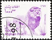 афганистан - около 1998: марку, напечатанную в афганистане от вопроса «wildlife» показывает льва (panthera leo), около 1998. — Стоковое фото