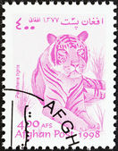 "AFGHANISTAN - CIRCA 1998: A stamp printed in Afghanistan from the ""Wildlife"" issue shows a Tiger (Panthera tigris), circa 1998. — Stock Photo"