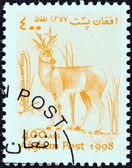 """AFGHANISTAN - CIRCA 1998: A stamp printed in Afghanistan from the """"Wildlife"""" issue shows a Roe deer (Capreolus capreolus), circa 1998. — Zdjęcie stockowe"""