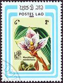 """Laos - circa 1985 : un timbre imprimé au laos de le """"Argentine 85 international exposition philatélique, buenos aires. orchidées""""question montre maxillaria sanderiana, circa 1985. — Photo"""