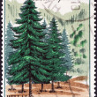 "Stock Photo: GREECE - CIRC1970: stamp printed in Greece from ""Nature Conservation Year"" issue shows Greek Fir (Abies cephalonica), circ1970."
