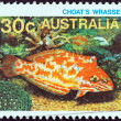 "AUSTRALIA - CIRCA 1984: A stamp printed in Australia from the ""Marine Life"" issue shows a Choat's wrasse, circa 1984. — Stock Photo"