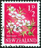 Nya Zeeland - ca 1960: en stämpel ut i Nya Zeeland visar manuka (tea tree) blommor, ca 1960. — Stockfoto