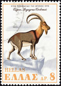 "GREECE - CIRCA 1970: A stamp printed in Greece from the ""Nature Conservation Year"" issue shows a Cretan Wild Goat (Capra aegagrus cretensis), circa 1970. — Stock Photo"