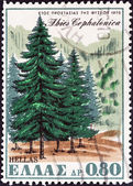 "GREECE - CIRCA 1970: A stamp printed in Greece from the ""Nature Conservation Year"" issue shows Greek Fir (Abies cephalonica), circa 1970. — Stock Photo"