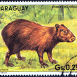 """PARAGUAY - CIRCA 1985: A stamp printed in Paraguay from the """"Paraguay animals """" issue shows a Capybara (Hydrochoerus hydrochaeris), circa 1985. — Stock Photo"""