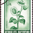 ARGENTINA - CIRCA 1970: A stamp printed in Argentina shows Sunflowers , circa 1970. — Stock Photo
