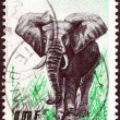IVORY COAST - CIRCA 1959: A stamp printed in Ivory Coast shows an Elephant, circa 1959. — Stock Photo