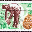 Постер, плакат: IVORY COAST CIRCA 1967: A stamp printed in Ivory Coast shows Pineapple Harvest circa 1967