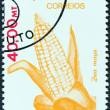 MOZAMBIQUE - CIRCA 1981: A stamp printed in Mozambique from the Agricultural Resources issue shows Maize, circa 1981.  — Stock Photo