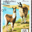 WESTERN SAHARA - CIRCA 1996: A stamp printed in Western Sahara shows Lama guanicoe, circa 1996.  — Stock Photo