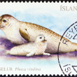 ICELAND - CIRCA 2010: A stamp printed in Iceland shows Harbor seals (Phoca vitulina), circa 2010.  — Stock Photo