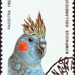 MADAGASCAR - CIRCA 1992: A stamp printed in Madagascar from the Birds issue shows a Cockatiel (Nymphicus hollandicus), circa 1992. — Stock Photo