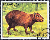 "PARAGUAY - CIRCA 1985: A stamp printed in Paraguay from the ""Paraguay animals "" issue shows a Capybara (Hydrochoerus hydrochaeris), circa 1985. — Stock Photo"
