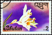 "BHUTAN - CIRCA 1976: A stamp printed in Bhutan from the ""Flowers "" issue shows an Orchid, circa 1976. — Stock Photo"