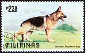 "PHILIPPINES - CIRCA 1979: A stamp printed in Philippines from the ""Cats and Dogs "" issue shows a German Shepherd, circa 1979. — Stock Photo"